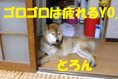 DSCF0786.JPG