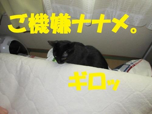 IMG_1636.JPG